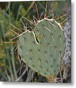 Cactus Heart Metal Print by Old Pueblo Photography