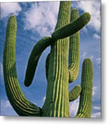 Cactus In The Clouds Metal Print