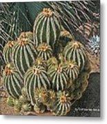 Cactus In The Garden Metal Print