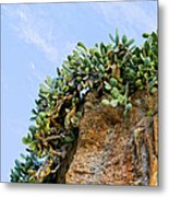 Cactus On A Cliff Metal Print