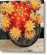 Cactus Orange Metal Print