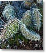 Cactus Plant 1 Metal Print