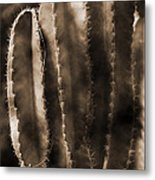 Cactus Sepia Tone Panama Metal Print