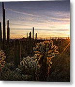 Cactus Sunset  Metal Print
