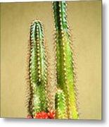 Cactus Towers Metal Print