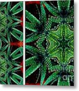 Cactus Triptych Metal Print