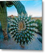 Cactus With A Twist Metal Print