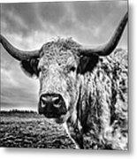 Cadzow White Cow Metal Print