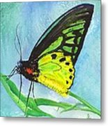 Cairns Birdwing Metal Print