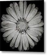 Calendula Flower - Textured Version Metal Print
