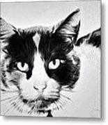Calico Kitty Metal Print