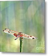 Calico Pennant From Above Metal Print
