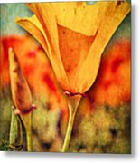California Poppy Metal Print by Pam Vick