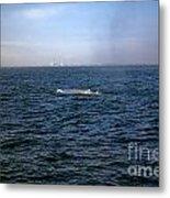 California Blue Whale Metal Print