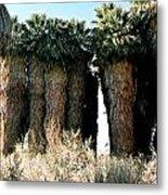 California Coachella Oasis2 Metal Print