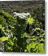 California Coast Hillside Flower 5d22613 Metal Print by Wingsdomain Art and Photography