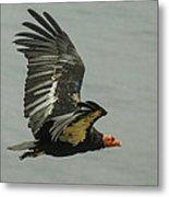 California Condor At Big Sur Metal Print