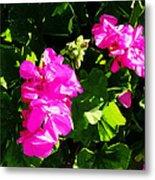 California Flowers Metal Print
