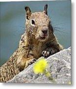 California Ground Squirrel Metal Print