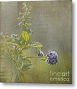 California Lilac Metal Print