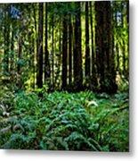 California - Muir Woods 007 Metal Print