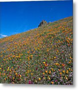 California Poppies Baby Blue Eyes And Owl Clover Metal Print