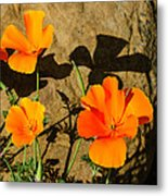 California Poppies - Crisp Shadows From The Desert Sun  Metal Print
