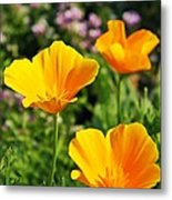 California Poppies In October Metal Print