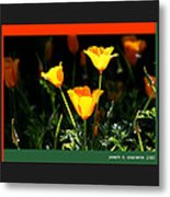 California Poppys 2007 Metal Print