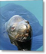 California Sea Life Metal Print