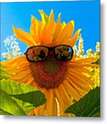 California Sunflower Metal Print by Bill Gallagher