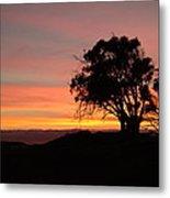 California Tree At Sunset Metal Print