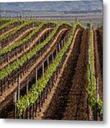 California Vineyard Metal Print