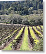 California Vineyards In Late Winter Just Before The Bloom 5d22051 Metal Print