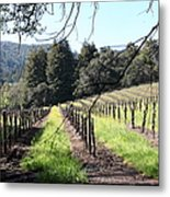 California Vineyards In Late Winter Just Before The Bloom 5d22053 Metal Print