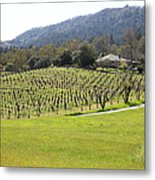 California Vineyards In Late Winter Just Before The Bloom 5d22073 Metal Print
