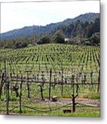 California Vineyards In Late Winter Just Before The Bloom 5d22088 Metal Print