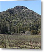 California Vineyards In Late Winter Just Before The Bloom 5d22142 Metal Print