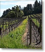 California Vineyards In Late Winter Just Before The Bloom 5d22166 Metal Print