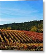 California Winery Apple Hill Metal Print