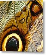 Caligo Atreus Metal Print