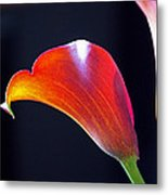 Calla Colors And Curves Metal Print by Rona Black