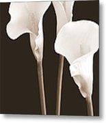 Calla Lilies In Triplicate In Sepia Metal Print