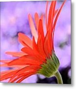 Calling On The Sun Metal Print