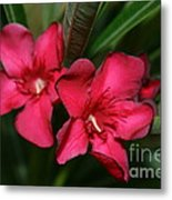 Calpoly Flowers By Diana Sainz Metal Print