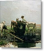 Calves At A Pond, 1863 Metal Print