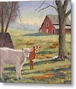 Calves At The Spring House Metal Print