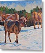 Calves In Snow Metal Print
