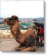 Camel And Jerusalem From Mount Olive Metal Print by Thomas R Fletcher