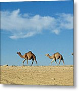 Camel Train Metal Print